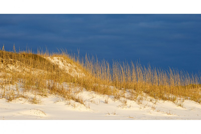 Weathered Sea Oats